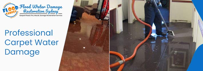 Professional Carpet Water-Damage Restoration
